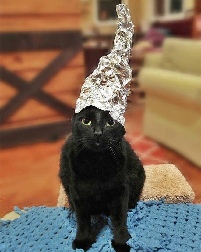 Cat - @sophie e molel