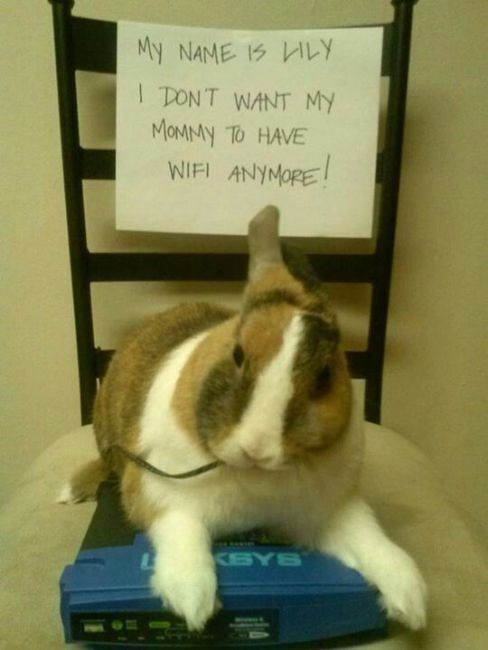 Domestic rabbit - My NAME IS LY I DONT WANT MY MOMMY TO HAVE WIFI ANYMORE KSYS