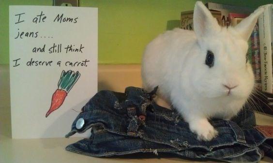 Rabbit - I ate Moms jeans.... and still think I deserve a arrat 4ee Facete Rocipes Vegetaria Meal