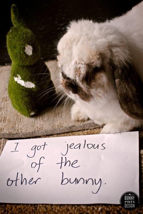Domestic rabbit - Jot Jealous of the other bunny BUNNY eats DESIGN