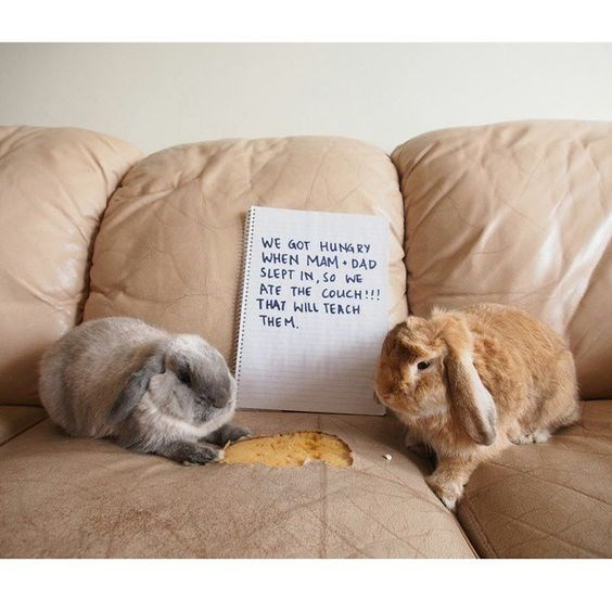 Beige - WE GOT HUNGRY WHEN MAM DAD SLEPT IN, SO WE ATE THE COUCH:!! THAT WILL TEACH THE M