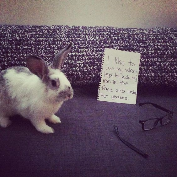 Domestic rabbit - I tke to Use my strong legs to kick m D mon in the face and broke Eher aasses.