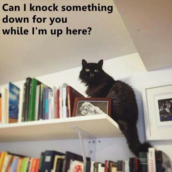 cat meme - Cat - Can I knock something down for you while I'm up here?
