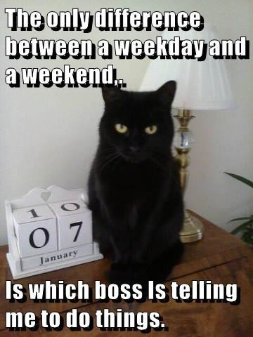 cat meme - Cat - The only dlference between a weekday and aweekend 1 O 7 January Is which boss Is telling me to do things.
