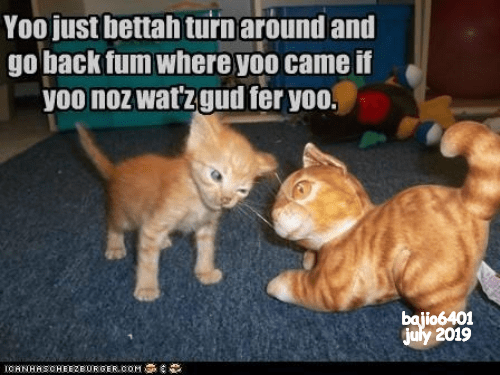 cat meme - Cat - Yoo just bettah turnaround and go back fum where yoo came if yoo noz watzgud fer yoo. bajio6401 july 2019 IOANHASOHEE2EURGERcoM