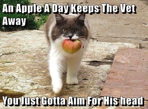 cat meme - Cat - An Apple A Day Keeps The Vet Away YouJust Gotta Aim For His head