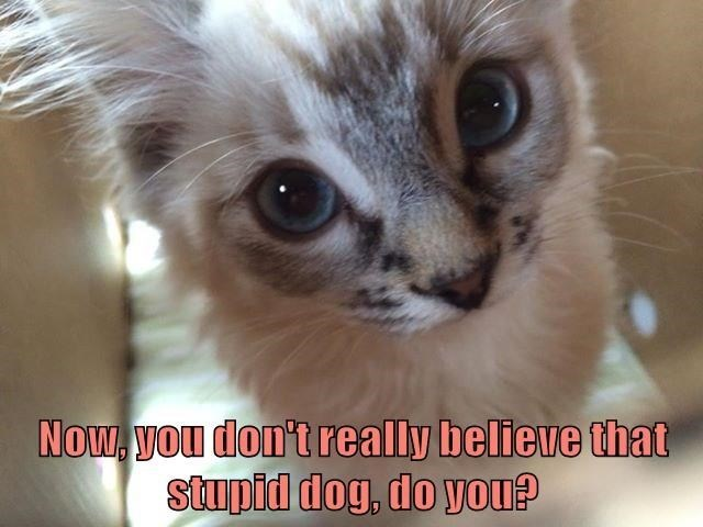 cat meme - Cat - NOw, VOu don't really believe that stupid dog, do you?