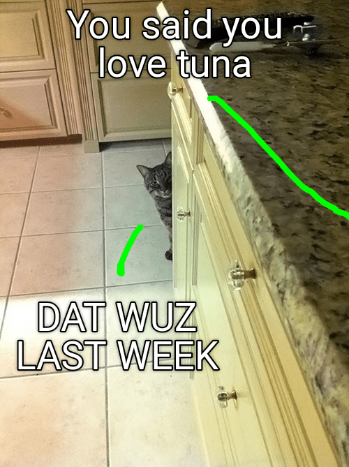 cat meme - Floor - You said you love tuna DAT WUZ LAST WEEK