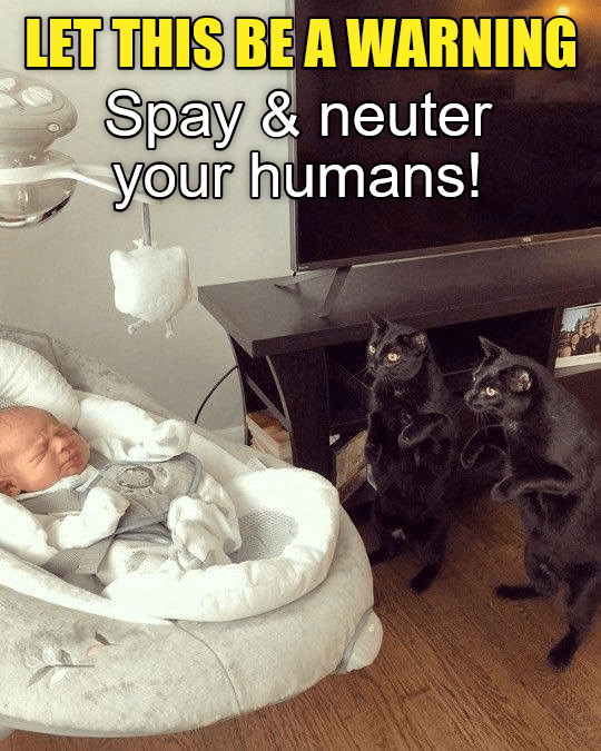 cat meme - Cat - LET THIS BE A WARNING Spay & neuter your humans!