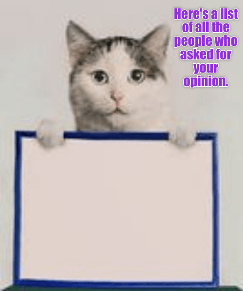 cat meme - Cat - Here's a list of all the people who asked for your opinion.