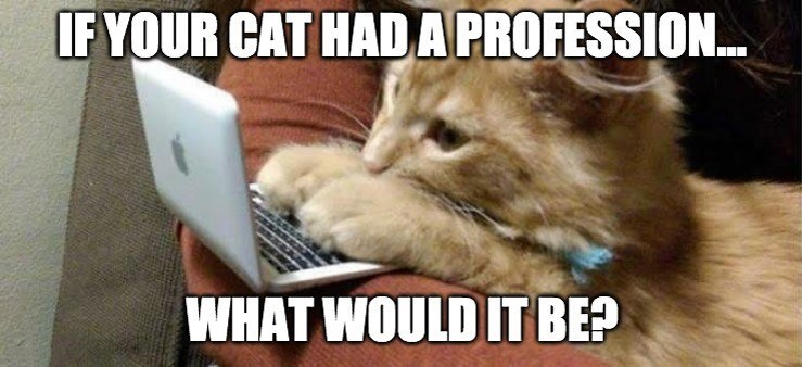 Cat - IF YOUR CAT HAD A PROFESSION... WHAT WOULD IT BE?