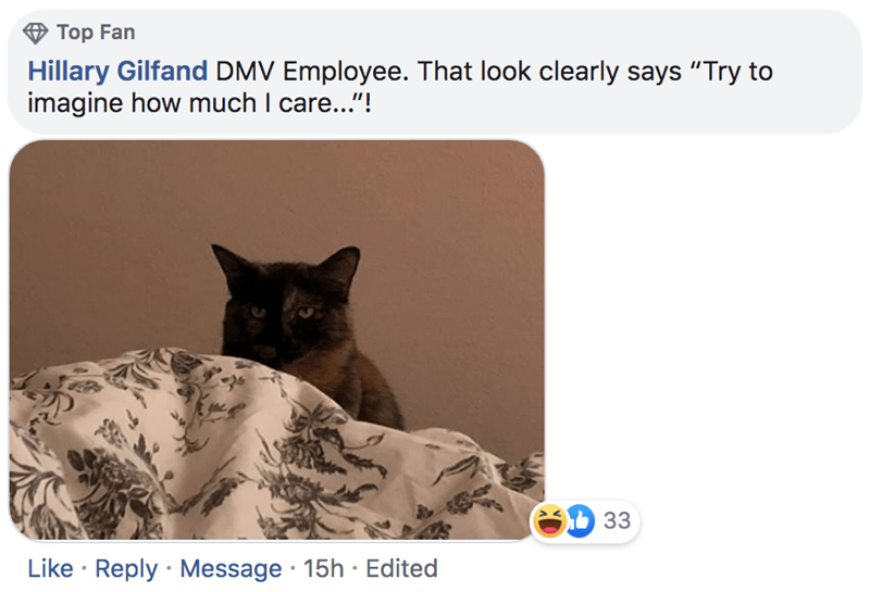 """Cat - Top Fan Hillary Gilfand DMV Employee. That look clearly says """"Try to imagine how much I care...""""! 33 Like Reply Message 15h Edited"""
