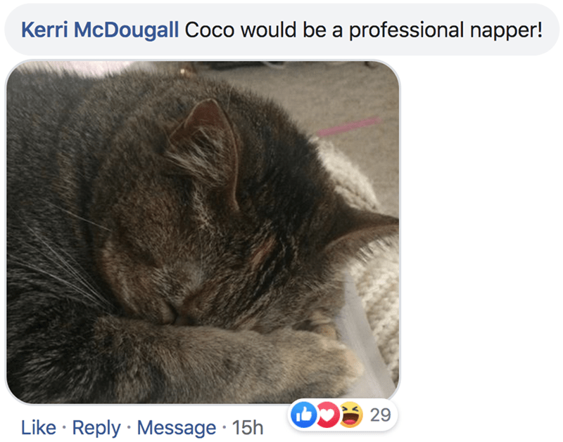 Cat - Kerri McDougall Coco would be a professional napper! 29 Like Reply Message 15h