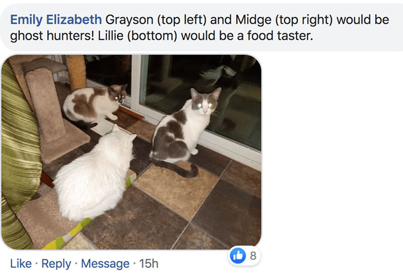 Cat - Emily Elizabeth Grayson (top left) and Midge (top right) would be ghost hunters! Lillie (bottom) would be a food taster. Like Reply Message 15h