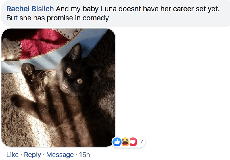 Cat - Rachel Bislich And my baby Luna doesnt have her career set yet. But she has promise in comedy 7 Like Reply Message 15h