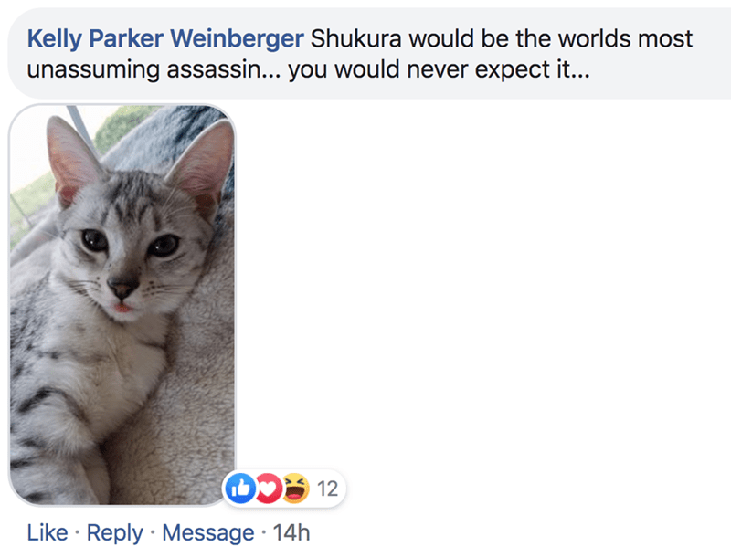 Cat - Kelly Parker Weinberger Shukura would be the worlds most unassuming assassin... you would never expect it... 12 Like Reply Message 14h