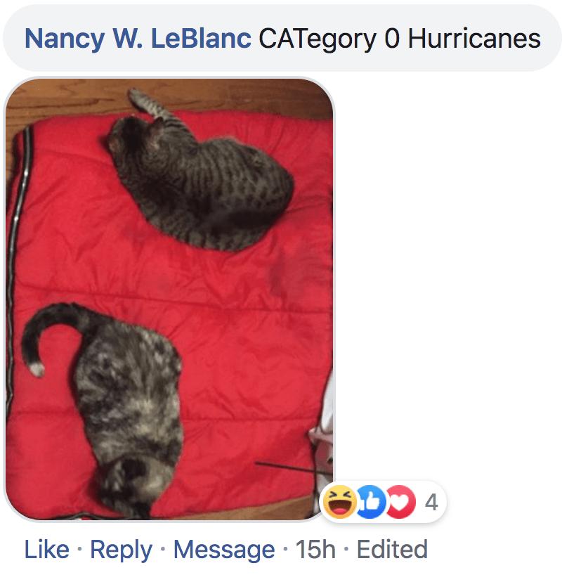 Dog - Nancy W. LeBlanc CATegory 0 Hurricanes Like Reply Message 15h Edited