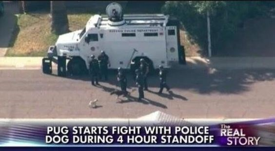 Mode of transport - PUG STARTS FIGHT WITH POLICE REAL DOG DURING 4 HOUR STANDOFF The STORY