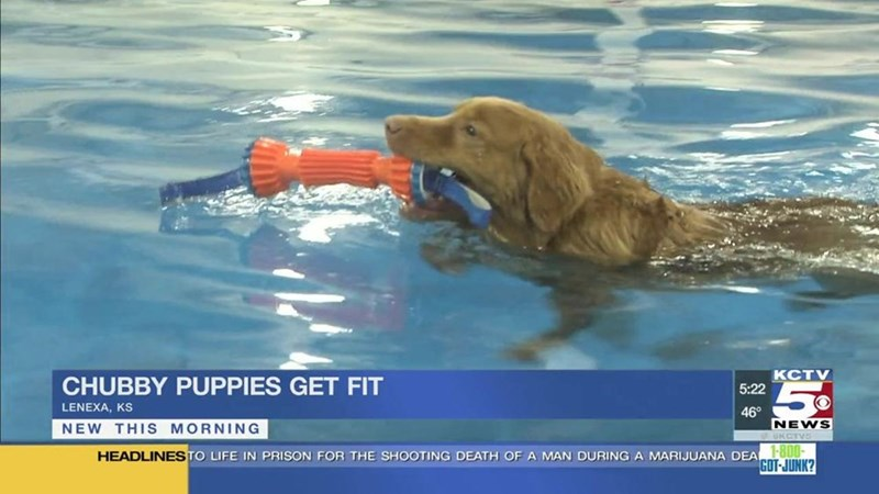 Dog - Ксту 5:22 CHUBBY PUPPIES GET FIT LENEXA, 46° NEWS UKCT NEW THIS MORNING HEADLINESTO LIFE IN PRISON FOR THE SHOOTING DEATH OF A MAN DURING A MARIJUANA DEA O GOT-JUNK?