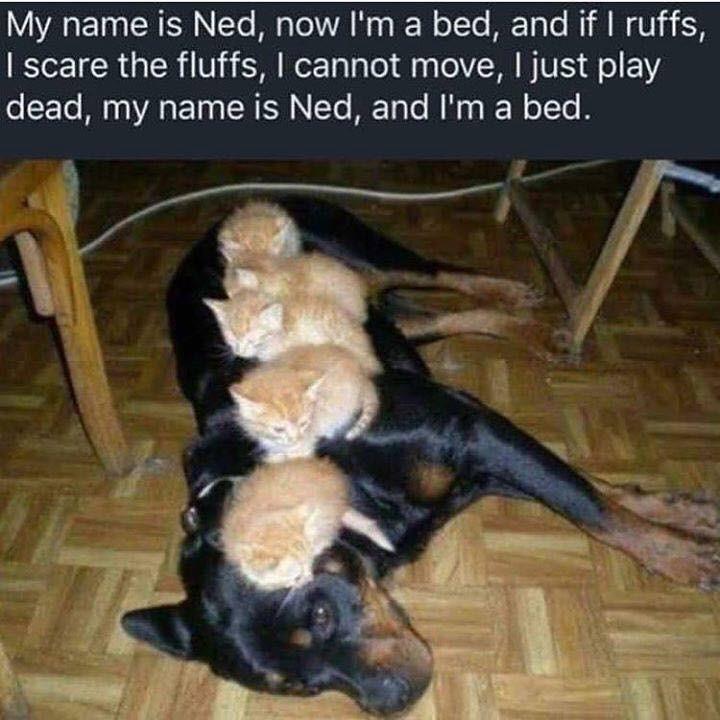 dog memes - 9339459328