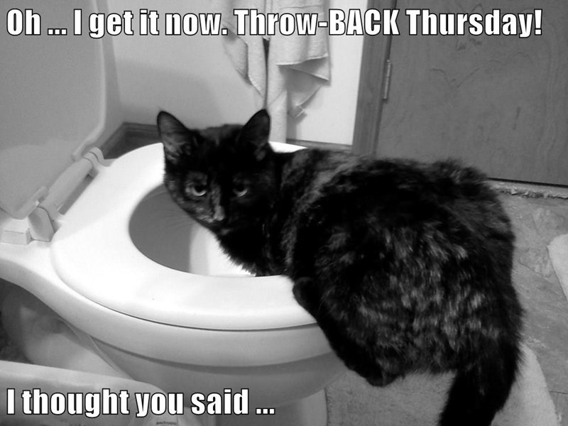 funny cat memes lolcats haha throwback whoops Thursday cute cats lol funny cats meow cats are weird Cats mistake cat memes - 9339476480