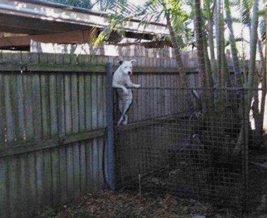 animal pic - Wall