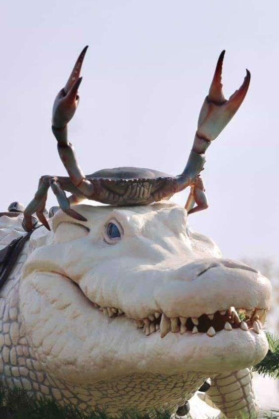 animal pic - Horn