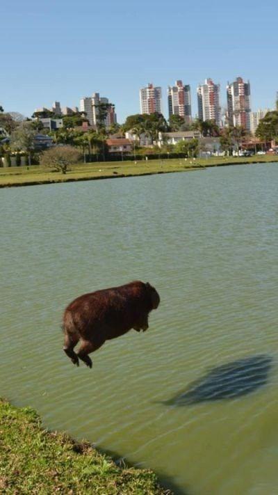animal pic - Bovine