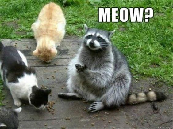 animal pic - Mammal - MEOW?