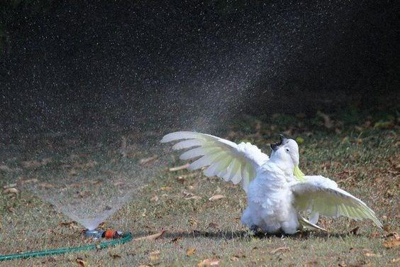animal pic - Bird