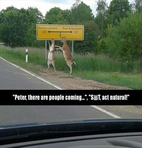"""animal pic - Road - Kaiserslautern Bad Kreuznach """"Peter, there are people coming.."""", """"ST, act natural!"""""""