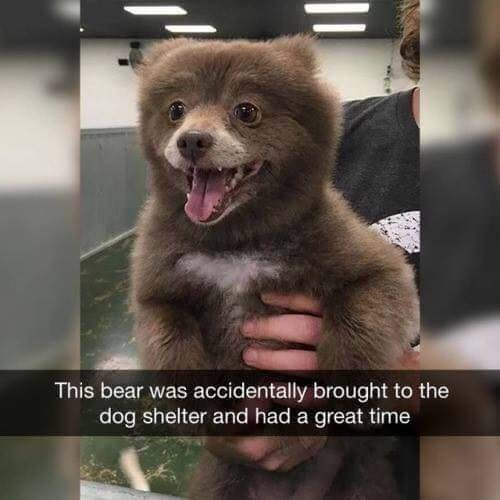Mammal - This bear was accidentally brought to the dog shelter and had a great time
