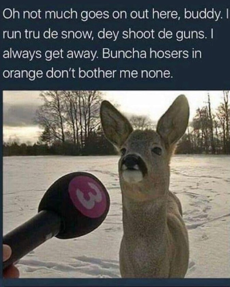 Text - Oh not much goes on out here, buddy. I run tru de snow, dey shoot de guns. I always get away. Buncha hosers in orange don't bother me none.