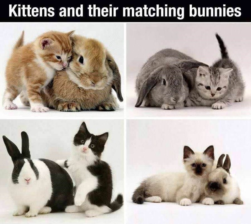 Mammal - Kittens and their matching bunnies