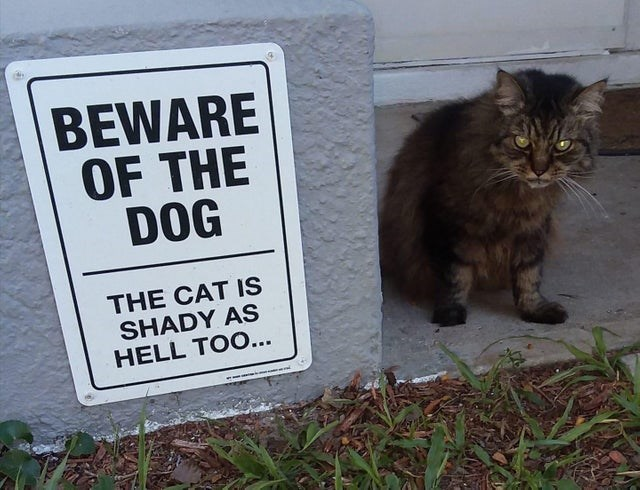 Cat - BEWARE OF THE DOG THE CAT IS SHADY AS HELL TOO..
