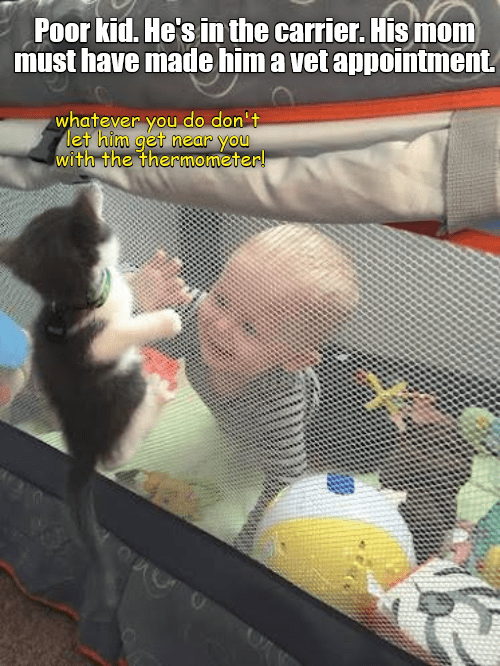 funny cat memes lolcats baby human Memes cute cats lol funny cats cats are weird Cats funny cat memes - 9339563008