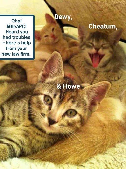 funny cat memes lolcats haha lolcat cute cats Lawyers funny cats Cats cat memes - 9339587584