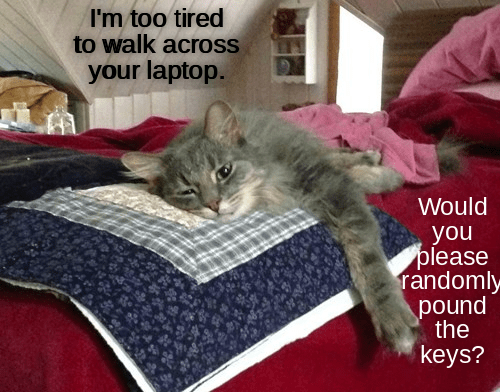 funny cat memes lolcats tired cute cats funny cats meow cat servant cats are weird kitty Cats cat memes - 9339641344
