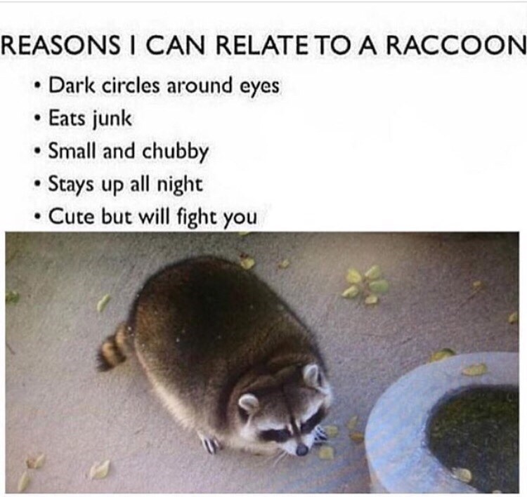"""Meme - """"REASONS I CAN RELATE TO A RACCOON Dark circles around eyes Eats junk Small and chubby Stays up all night Cute but will fight you"""""""