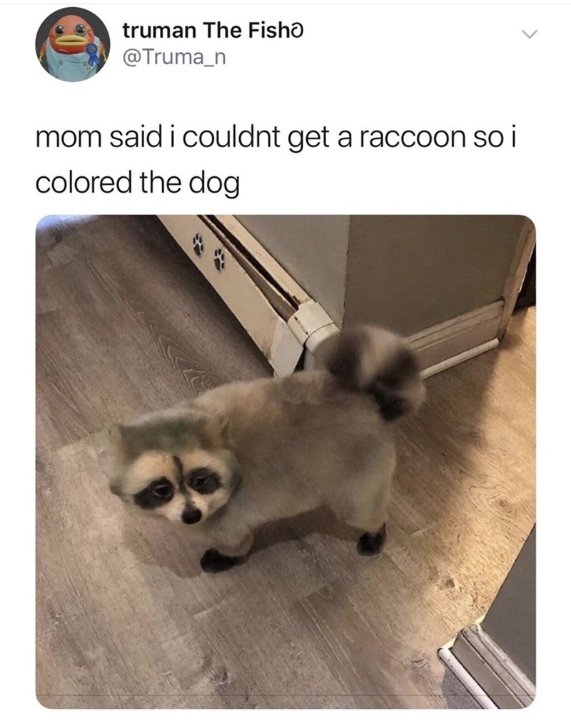 Canidae - truman The Fisho @Truma_n mom said i couldnt get a raccoon so i colored the dog