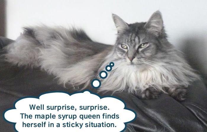 funny cat memes lolcats evil hooman cute cats lol funny cats meow evil cat Cats cat memes - 9339660800