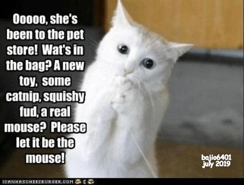 cat meme catnip anticipation mouse - 9339681024