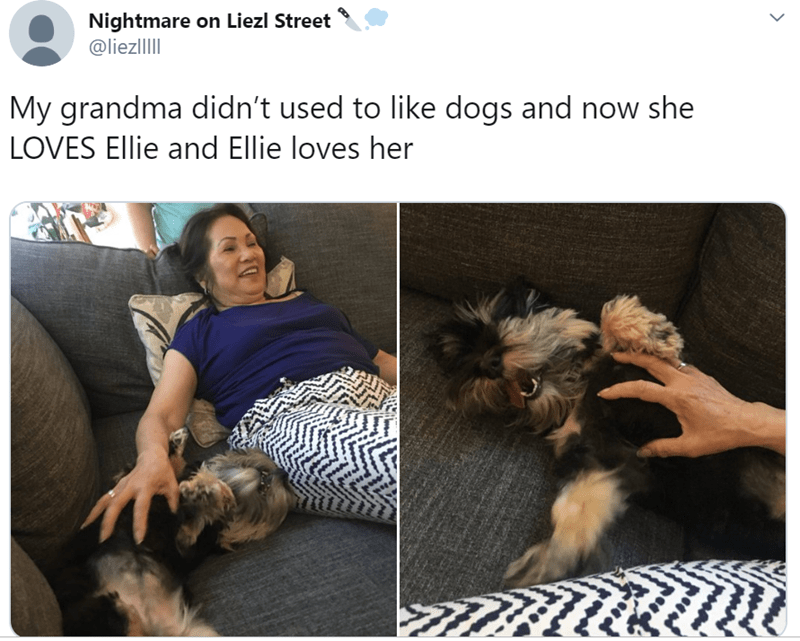 grandparents and pets - Dog - Nightmare on Liezl Street @liezllI My grandma didn't used to like dogs and now she LOVES Ellie and Ellie loves her