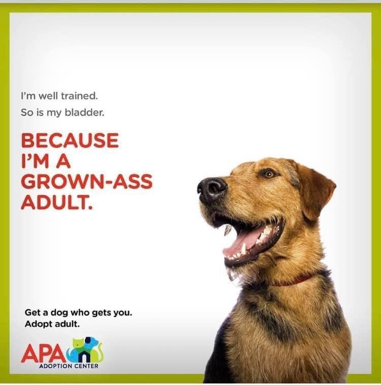 Dog breed - I'm well trained. So is my bladder. BECAUSE P'MA GROWN-ASS ADULT. Get a dog who gets you. Adopt adult. APA ADOPTION CENTER