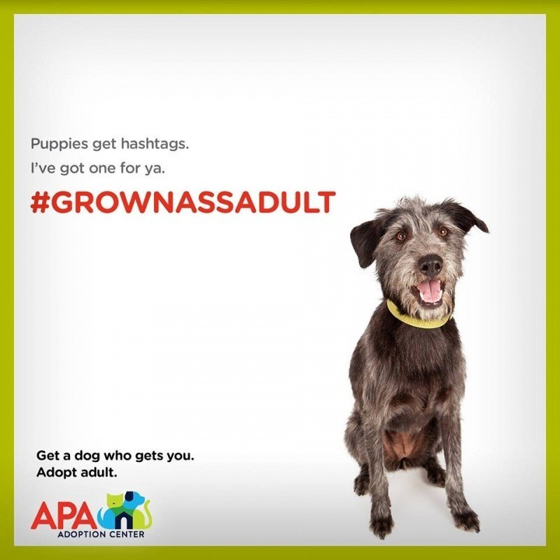 Dog breed - Puppies get hashtags. I've got one for ya. #GROWNASSADULT Get a dog who gets you Adopt adult. APA ADOPTION CENTER
