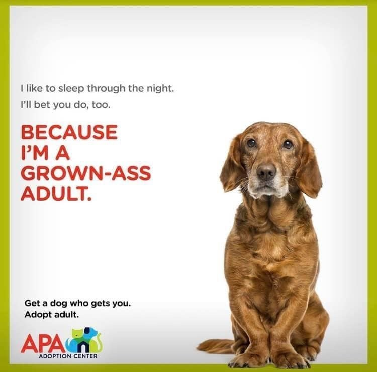 Dog - Ilike to sleep through the night. P'll bet you do, too. BECAUSE P'M A GROWN-ASS ADULT. Get a dog who gets you Adopt adult. APA ADOPTION CENTER