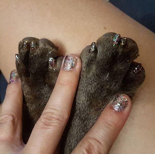 dog pedicure - Skin