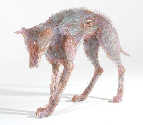 glass animal - Canidae