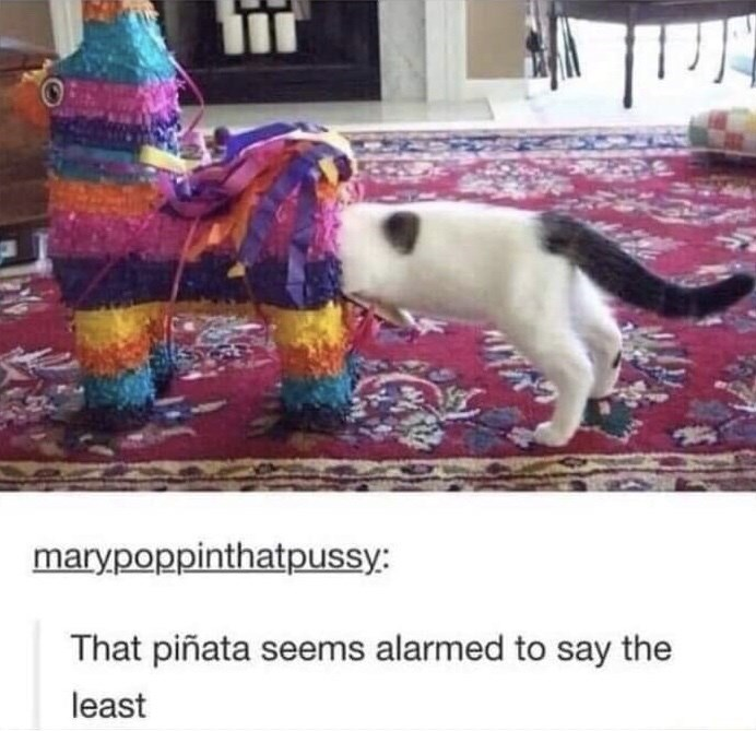 Dog - marypoppinthatpussy: That piñata seems alarmed to say the least