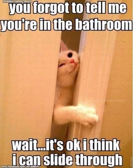 Photo caption - you forgot to tel me you're in the bathroom cataddictsanoy-mouse wait...it's oki thin slide through www.facebook.com cat.oddicts